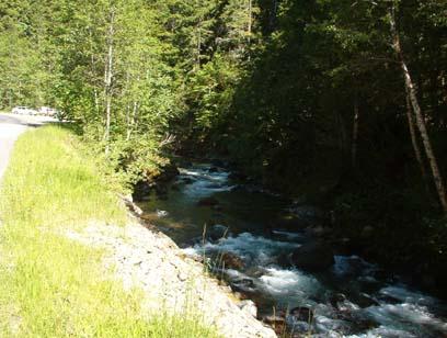 Rapids-Filled Skate Creek
