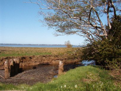 View of Grays Harbor from Bayview Road