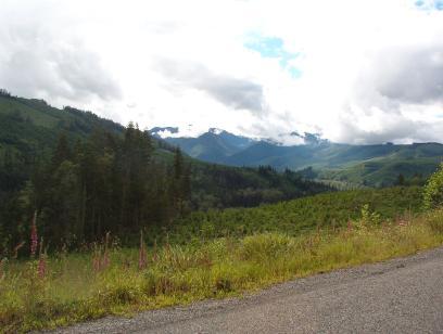 View up towards Mt. Rainier