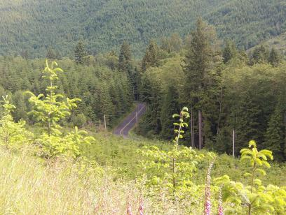 Carbon River Road. The left side of the Y